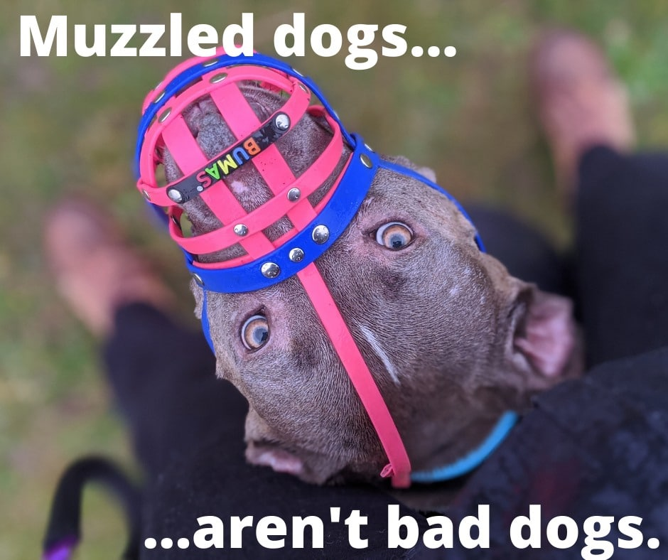 Muzzled Dogs Aren't BAD Dogs!